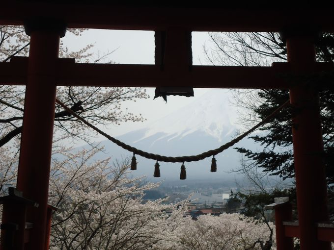 鳥居越しに見える桜と富士山