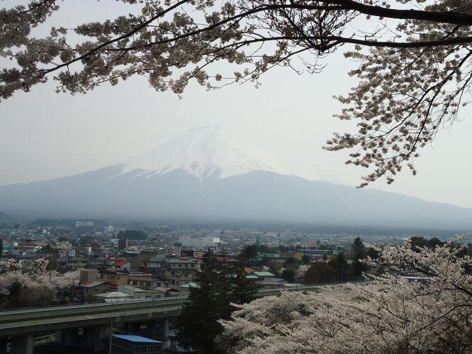 美しい富士山の稜線と桜、市街地の絶景