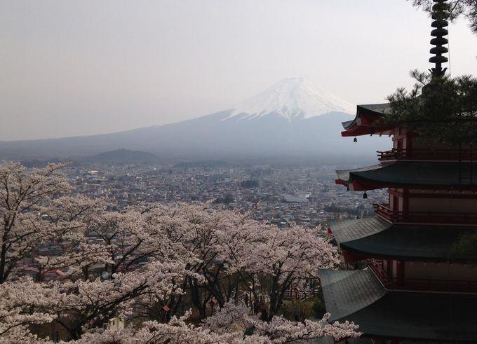 新倉浅間神社一番の絶景・富士山+桜+忠霊塔