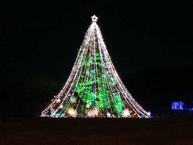 闇に浮かぶ巨大クリスマスツリー