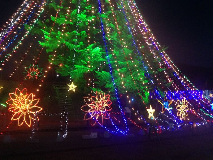ロードトレインで巨大クリスマスツリーの近くへ