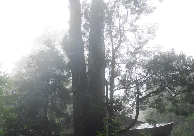 「日の宮」と命脈15000年の天神木