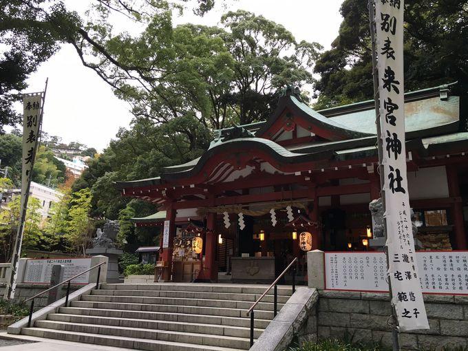来宮神社は木の神様がいらっしゃる、まさに「木の宮」
