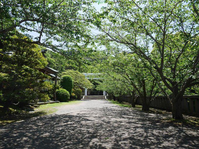 「イヤシロチ」そして「龍の爪」にあたる安房神社