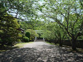 房総半島・館山の「イヤシロチ」安房神社で運気を強めよう!