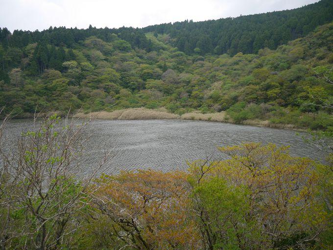 鬱々とした空気の精進湖とかつての箱根