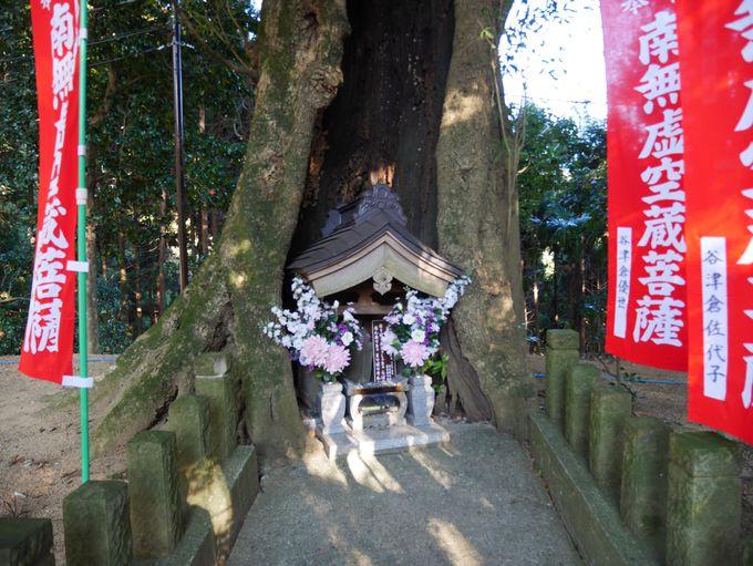木のうろと宝物殿の仏様
