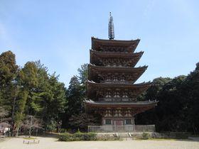 京都で一番の桜の名所の醍醐寺!花の醍醐以外の魅力も紹介!