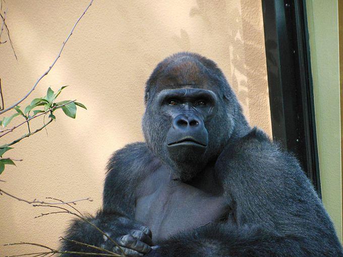 京都市動物園の概要とアクセス