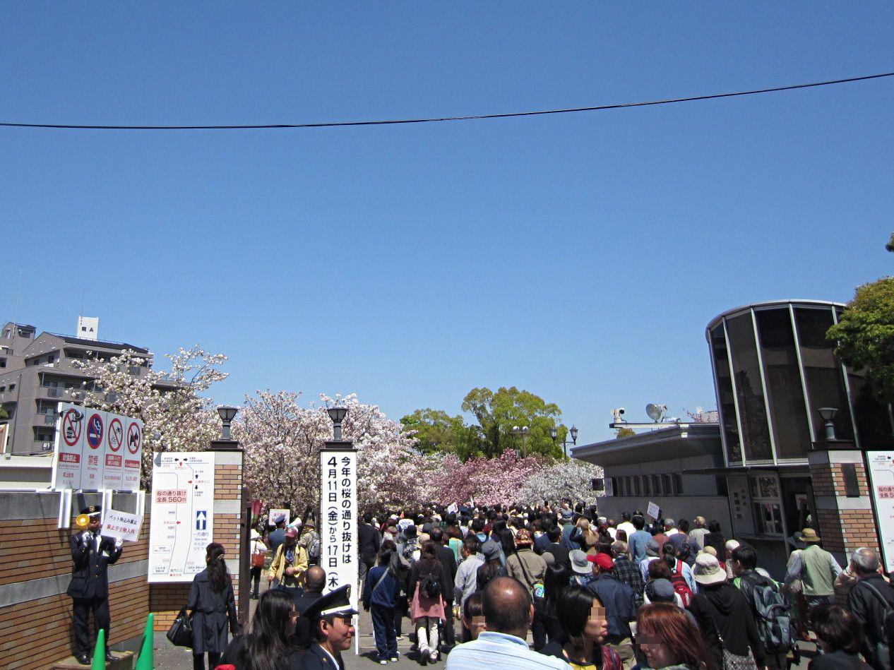 桜の通り抜けの開催時期と造幣局へのアクセス