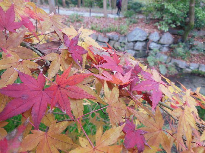 糺の森は京都で最も遅い紅葉スポット