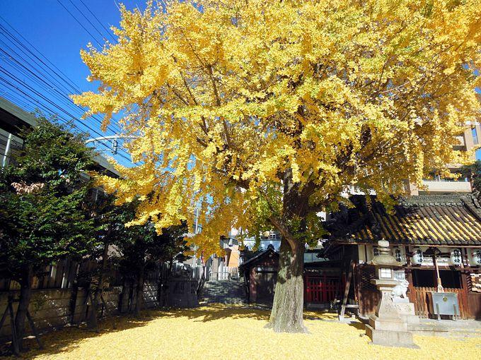 大阪府寝屋川市の住吉神社の紅葉でほっこり