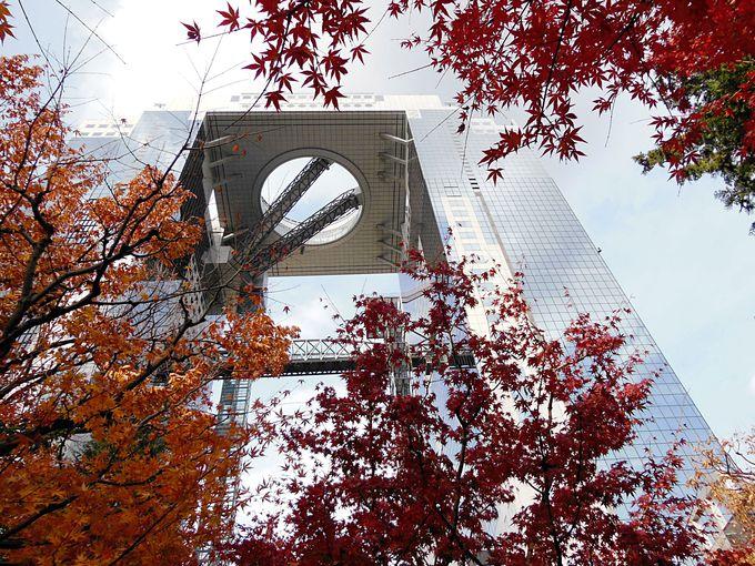 関西の紅葉ラストを飾るのは大阪梅田のスカイビル
