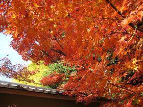 こんなに美しい紅葉が無料!東京・荻窪の日本庭園「大田黒公園」