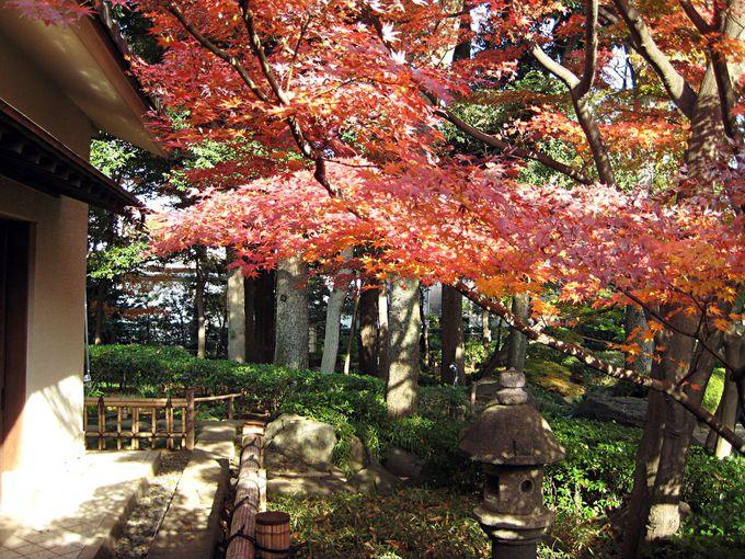 大田黒公園とモミジとさまざまな表情