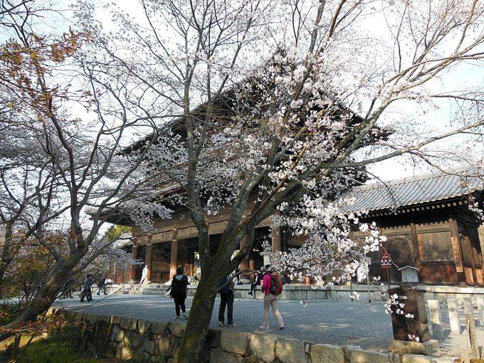 春と秋は雰囲気の変わる南禅寺三門周辺
