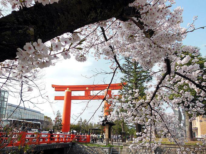 他の桜スポットも徒歩圏内