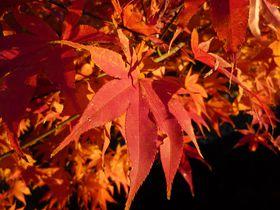 午後が断然オススメ!真っ赤に燃え立つ京都・哲学の道の紅葉