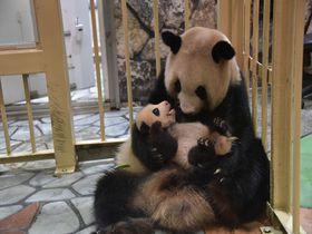 家族でお出かけの定番!国内のおすすめ動物園10選