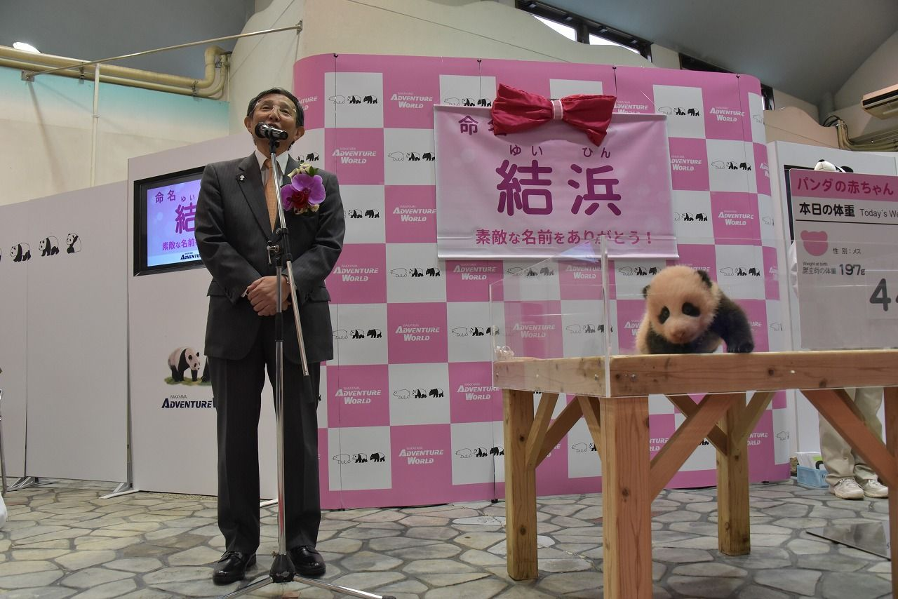 アドベンチャーワールドのパンダ繁殖実績