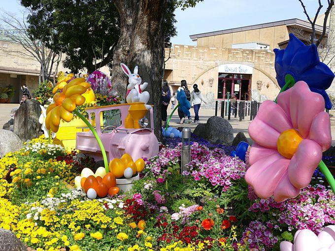 お花がいっぱいのひらパー