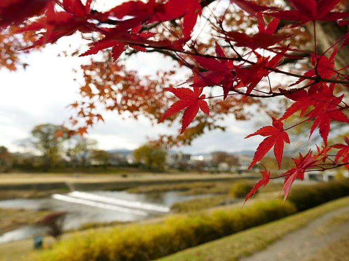 さまざまな季節を楽しめる鴨川