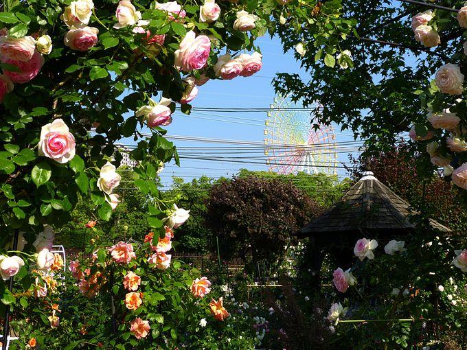 お帰りの前に京阪園芸へちょっと寄り道