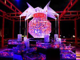 二条城でアートアクアリウム!金魚が舞う京都は最高に幻想的