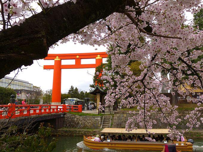 疏水の力強い流れと桜