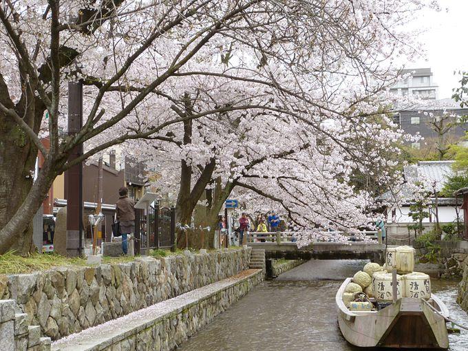都市部を美しく流れる高瀬川