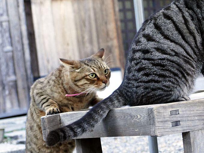 猫の神社、梅宮大社