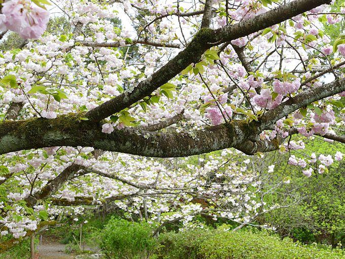 梅宮大社を彩る季節の花々