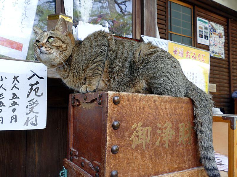 猫好き憧れの猫神社!京都の梅宮大社は花々が美しい子宝神社
