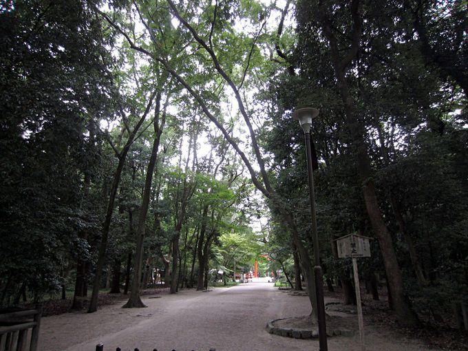 舞台となるのは下鴨神社と糺の森