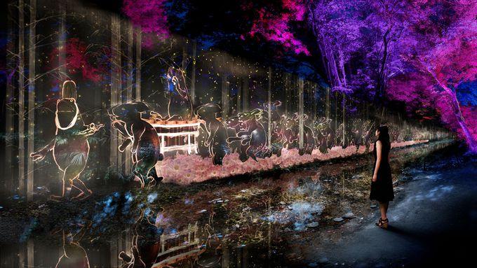 糺の森の光の祭に新たな作品も登場