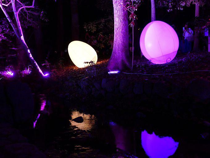 糺の森に光の球体
