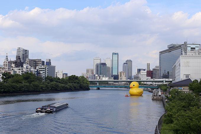 ラバー・ダックが大阪の天満橋に出現!