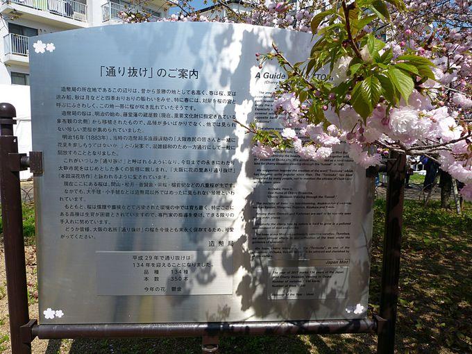 そもそもなぜ造幣局で桜の通り抜け?