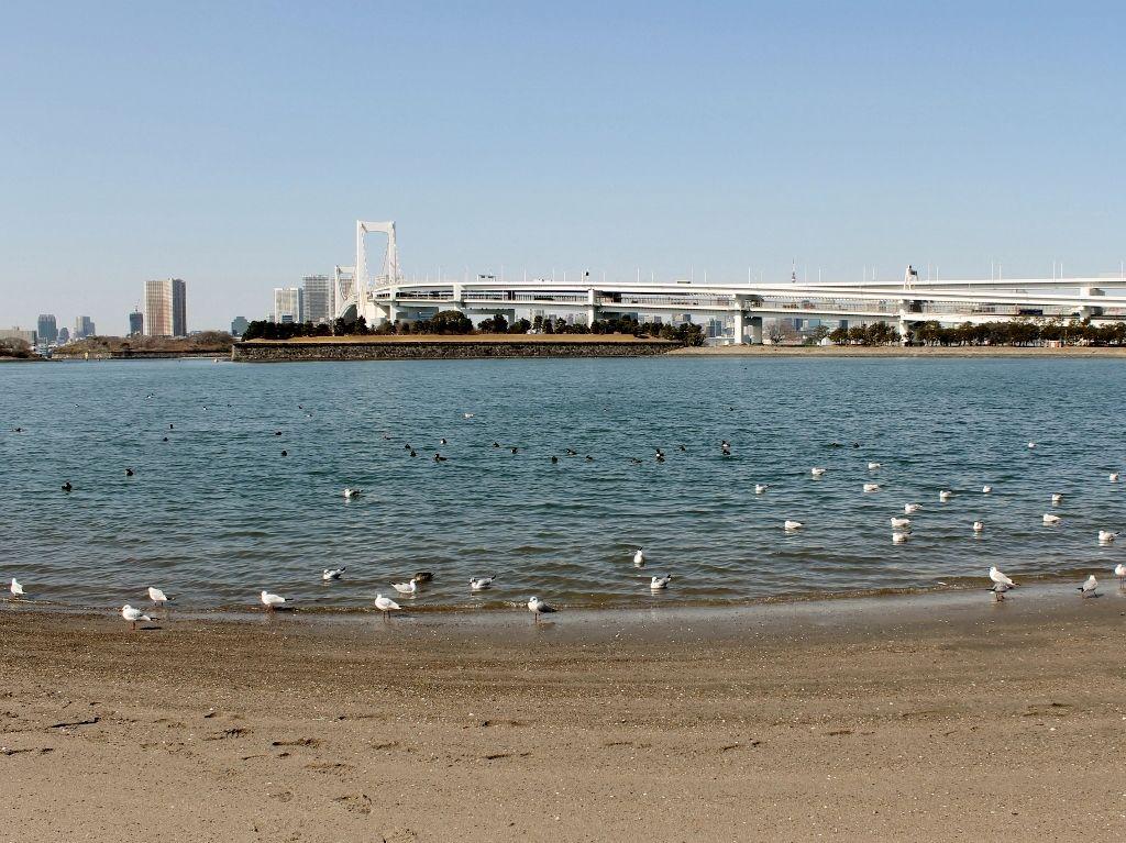 東京リゾート『お台場海浜公園』を楽しむ