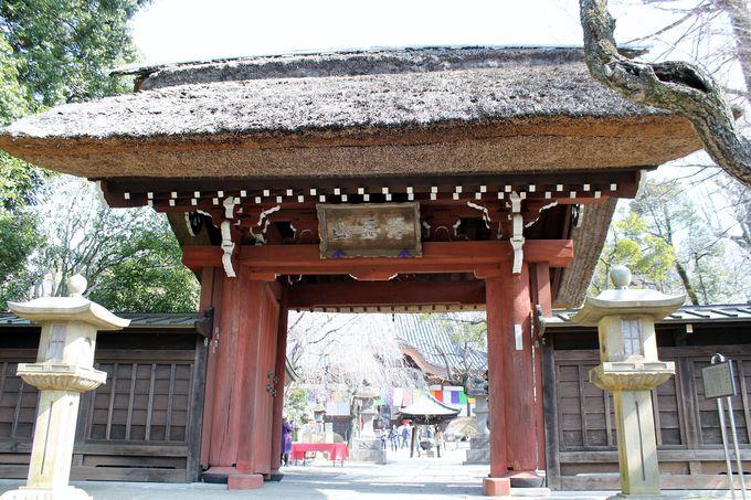 歴史と自然がぎっしり詰まった『深大寺』