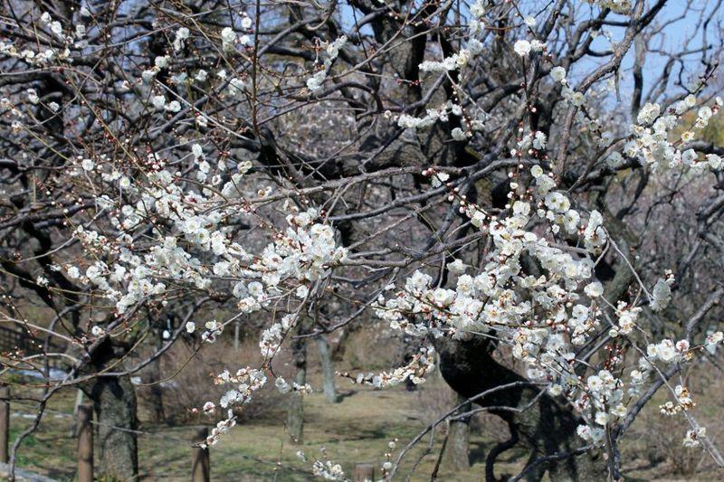 毎日が旬!湧き水の宝庫『深大寺・神代植物公園』(東京)を楽しむ