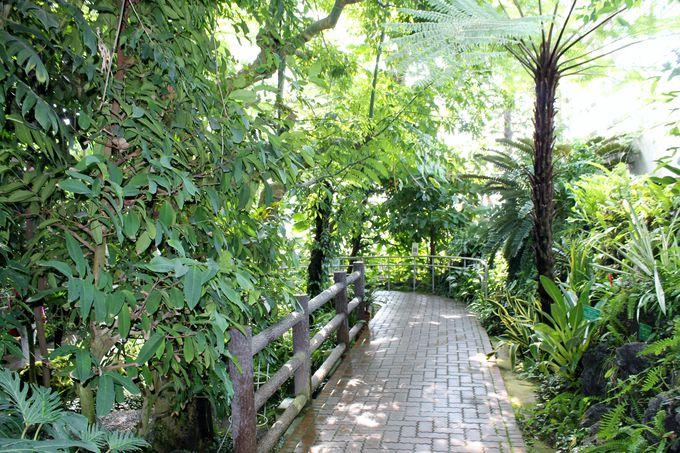 熱帯植物に圧倒されっぱなし! 『大温室』