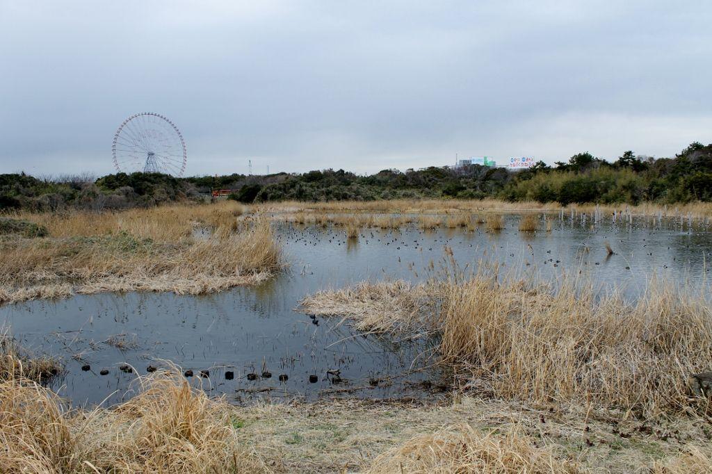 野鳥たちの聖域『鳥類園』