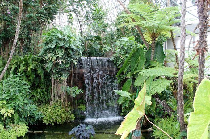 余熱利用 省エネが生み出す『夢の島熱帯植物館』