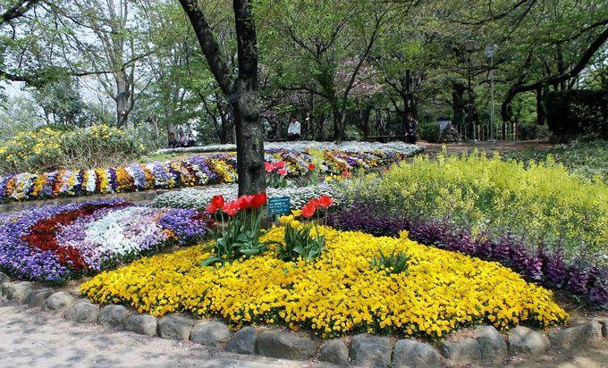 緑に囲まれた石段とモノレールのコントラストが面白い!『飛鳥山公園』