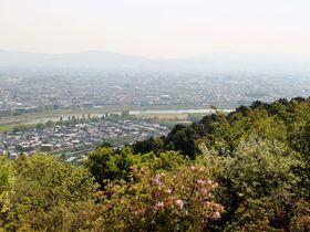 京都を一望する地に約130頭のニホンザルが!嵐山の穴場スポット!