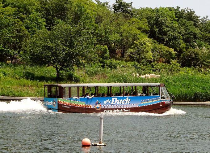 水陸両用バスの中ではかなり速い!? 7ノット