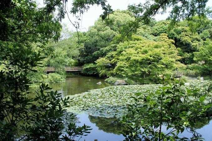 野鳥観察が楽しめる憩いのスペース「大池」