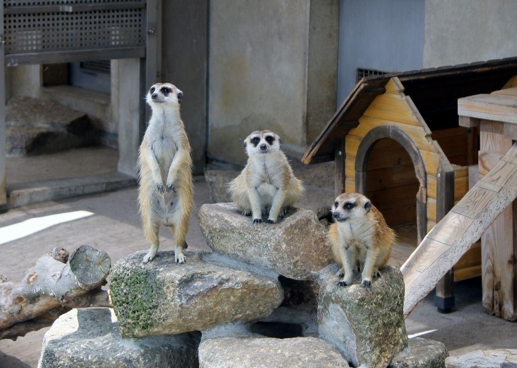 動物たちとも触れ合える!市川市動植物園