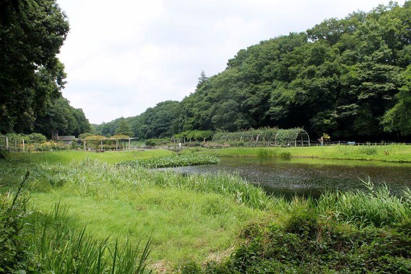尾瀬のような風景も!市川市「大町公園」は動物園やアスレチックなど見どころ満点